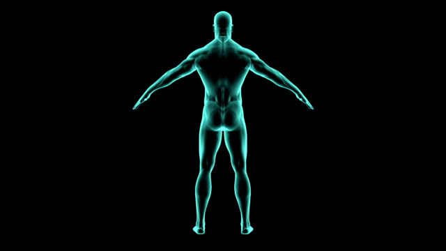 X-ray 360 degree human body. Medical video background.