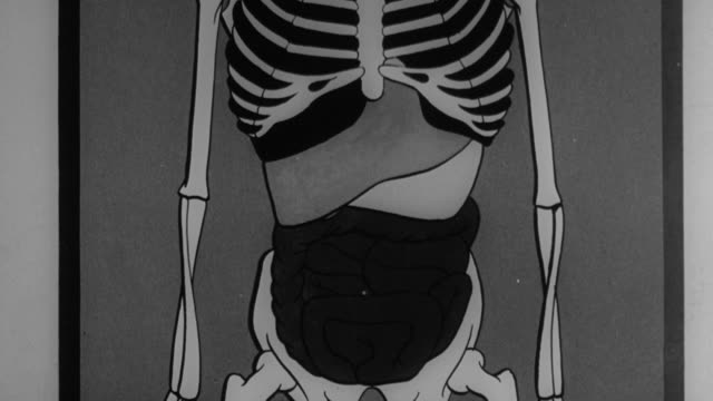 composite x-ray displaying the advantages of proper posture on the body, including better breathing and less indigestion, and businessman practicing standing with better posture / united kingdom - 1944 stock videos & royalty-free footage