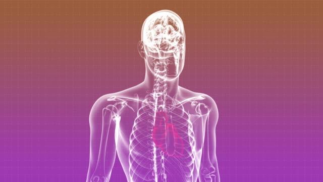 Röntgenfoto van menselijk lichaam - loopbare