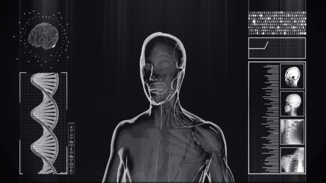 vídeos y material grabado en eventos de stock de radiografía 4k de los músculos de la mitad humana y la mitad de la piel vídeo de stock - tronco cerebral