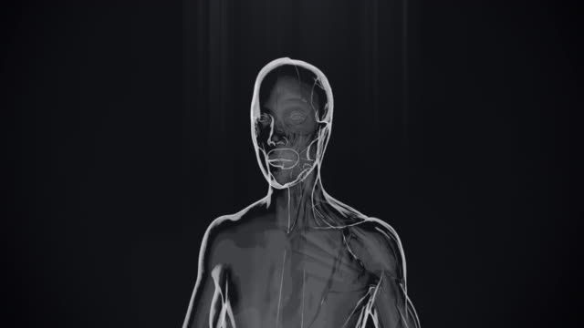 4k  x-ray of human half muscles and half skin | stock video - human muscle stock videos & royalty-free footage