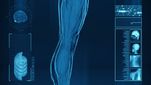 4k  x-ray of human muscle | stock video - human muscle stock videos & royalty-free footage