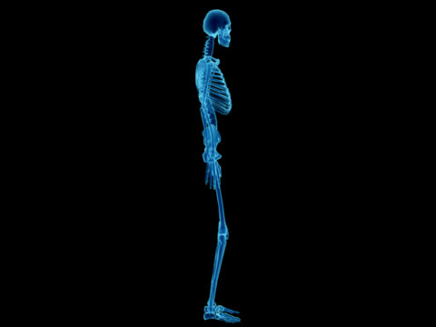 x-ray of human skeleton for study - full length stock videos & royalty-free footage