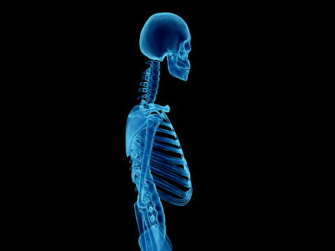 X-ray of human skeleton for study