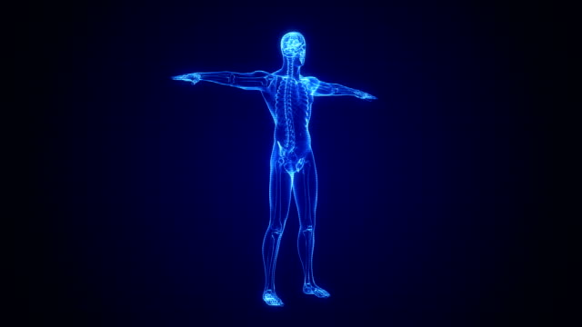 x-ray of human skeleton | loopable - the human body stock videos & royalty-free footage