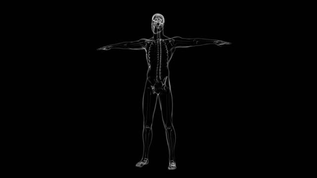 vídeos de stock e filmes b-roll de x-ray of human skeleton | loopable - anatomia