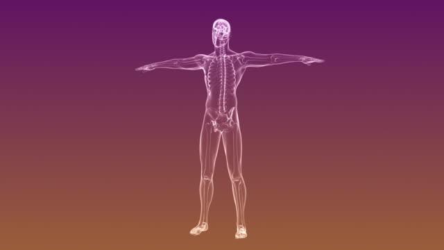 人間の骨格の x 線 |単発 - 人体点の映像素材/bロール