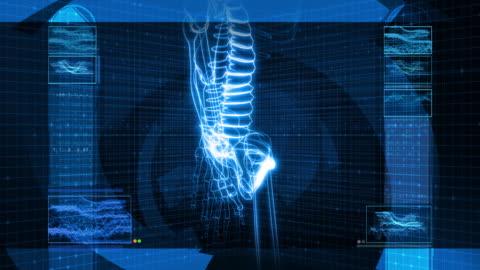 x-ray of human skeleton (hd - hüfte stock-videos und b-roll-filmmaterial