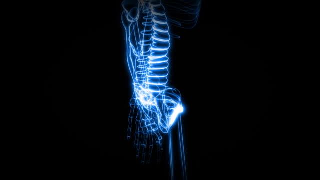 x-ray of human skeleton (hd) - människoryggrad bildbanksvideor och videomaterial från bakom kulisserna