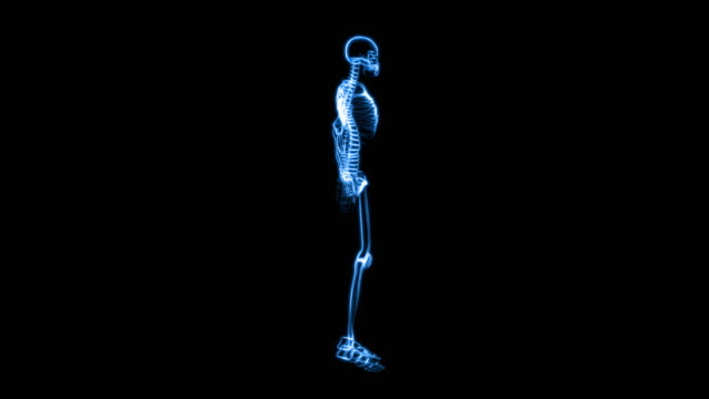 X-Ray of Human Skeleton (HD)