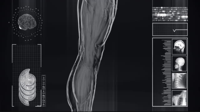 4k  x-ray of human | stock video - human muscle stock videos & royalty-free footage