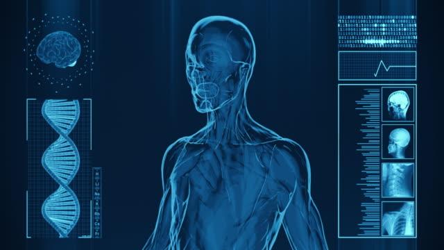 4k röntgen der menschlichen frauen muskeln | stock video - biomedizinische zeichentrickaufnahme stock-videos und b-roll-filmmaterial
