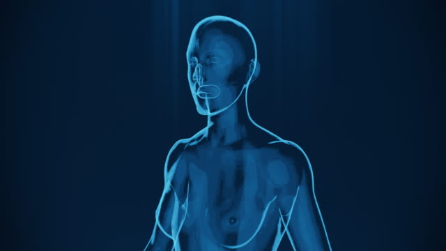 vídeos de stock e filmes b-roll de 4k  x-ray of human woman | stock video - tronco cerebral