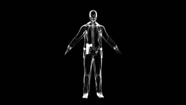 X-ray of man with concealed weapon | Loopable
