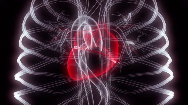 radiografia del cuore nel petto umano - biomedical illustration video stock e b–roll