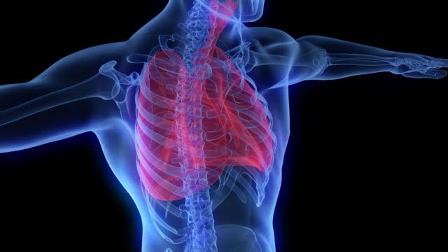 röntgenaufnahme des oberen teils des menschlichen körpers und der lunge - wirbelsäule mensch stock-videos und b-roll-filmmaterial