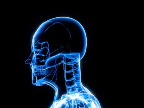 x-ray scan of human - human vertebra stock videos and b-roll footage