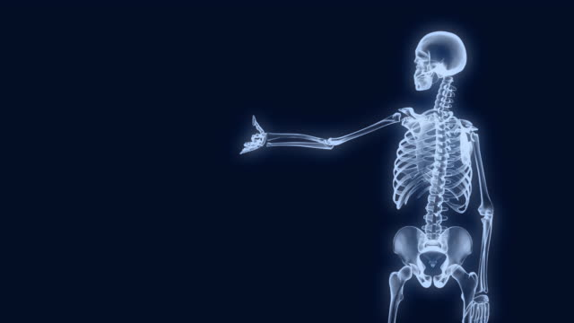 X-Ray Skeleton Presentation 1