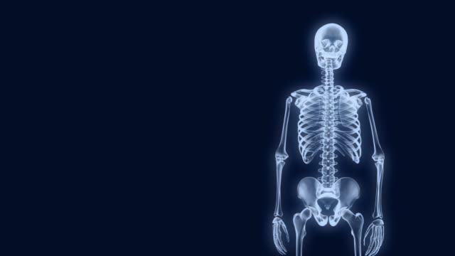X-Ray Skeleton Presentation 2