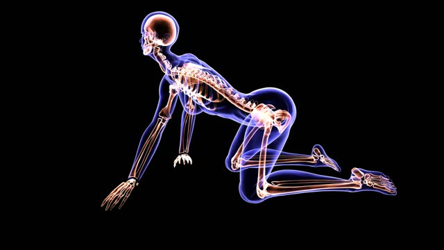 vidéos et rushes de xray yoga position - représentation féminine