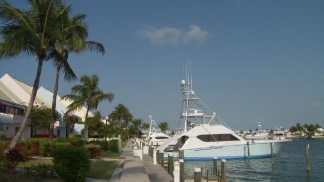 ms, td, yachts in marina, abaco islands, bahamas - fan palm tree stock videos & royalty-free footage