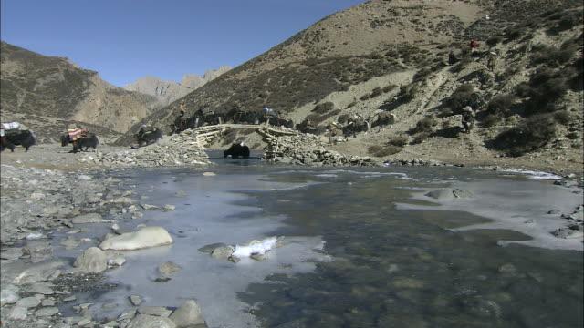 ms yak caravan crossing traditional bridge over frozen river / high himalayas, upper dolpo near tibetan border, nepal    - yak stock videos & royalty-free footage
