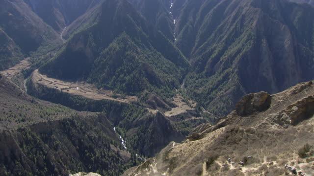 ws yak caravan descending to distant valley / near ringmo village, himalayas, upper dolpo, nepal   - arbeitstier stock-videos und b-roll-filmmaterial