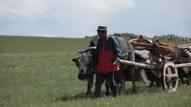 yak cart led by nomad men passing by - animale da lavoro video stock e b–roll