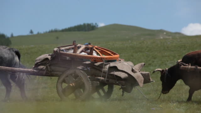 yak cart led by nomad men passing by - liten djurflock bildbanksvideor och videomaterial från bakom kulisserna