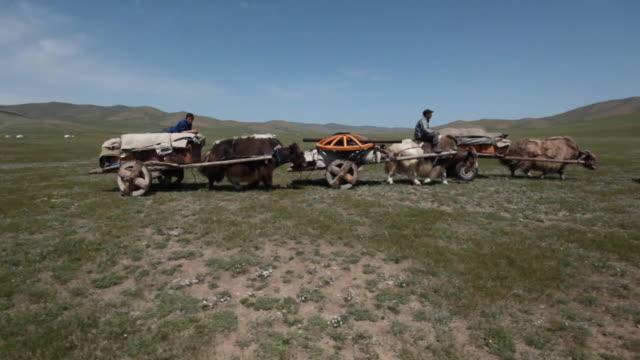 yak carts convoy riding in line - arbeitstier stock-videos und b-roll-filmmaterial