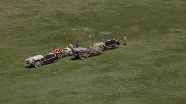 yak carts moving in open landscape - arbeitstier stock-videos und b-roll-filmmaterial