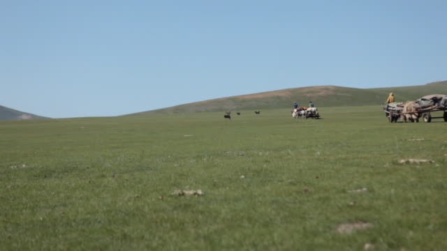 yak carts moving on open landscape - medium group of animals stock videos & royalty-free footage