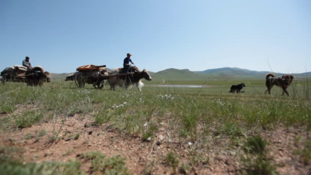 yak carts passing by on open landscape - animale da lavoro video stock e b–roll