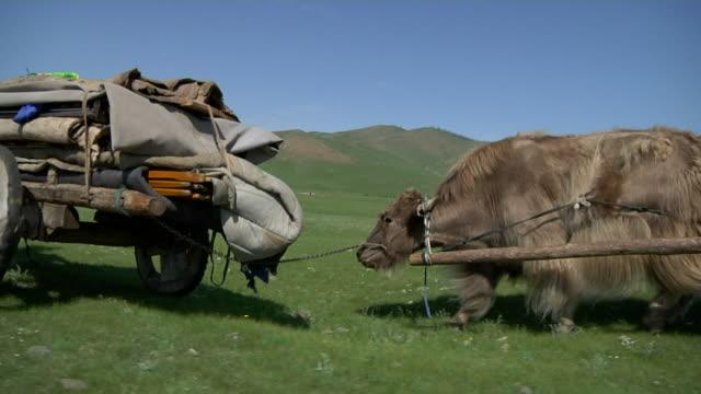 yak carts riding through open landscape - arbeitstier stock-videos und b-roll-filmmaterial
