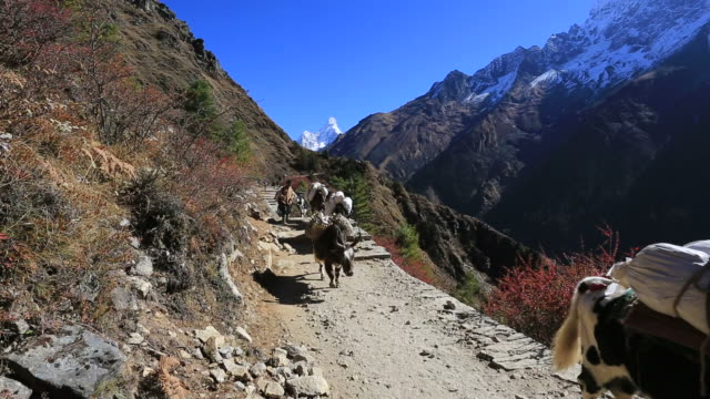 Yaks and Sherpas on the pass to Tengboche village, Dudh Koshi river valley, Himalayan Mountains, Nepal