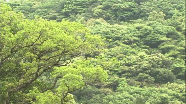 yakushima in japan - cedar stock videos & royalty-free footage