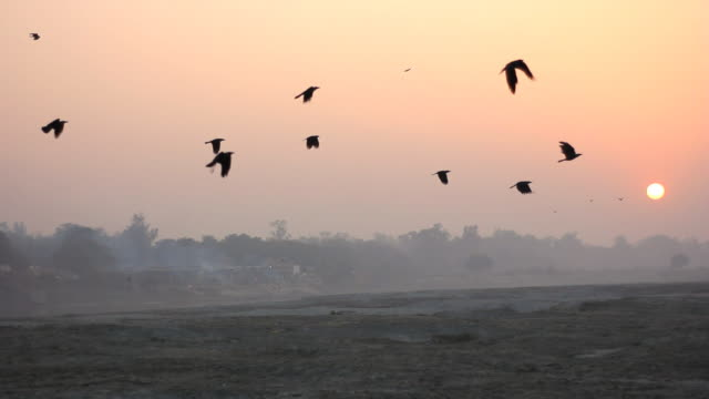 yamuna riverbed with crematory in agra, india - agra stock videos and b-roll footage