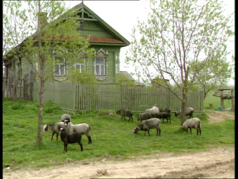 yaroslavl gv yaroslavl city woman painting farmers working on land milk van being unloaded vox pops queing up to buy dairy prods vox pops in shop... - vladimir russia stock videos and b-roll footage