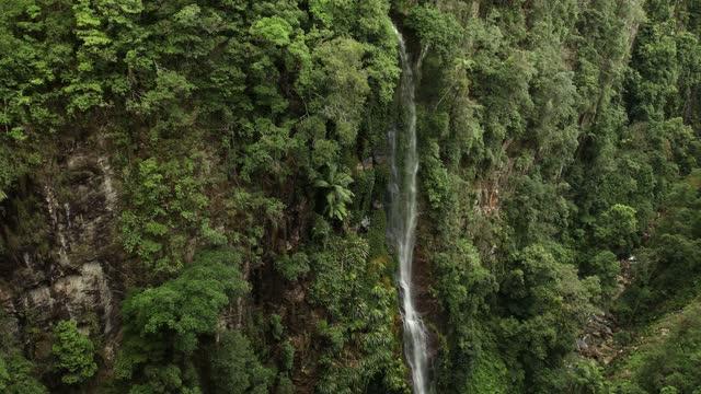 yarrabilgong falls in lamington national park australia - tranquil scene stock videos & royalty-free footage