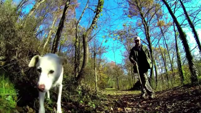 67 year old ezio a truffle hunter for 50 years searches for the coveted fungi with the help of his dog jolli in monchiero woods near turin in... - fungus stock videos & royalty-free footage