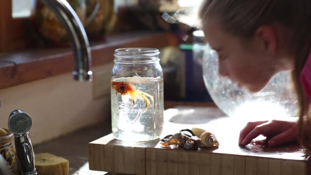 8 year old girl cleaning out her goldfish bowl - 注ぎ口点の映像素材/bロール