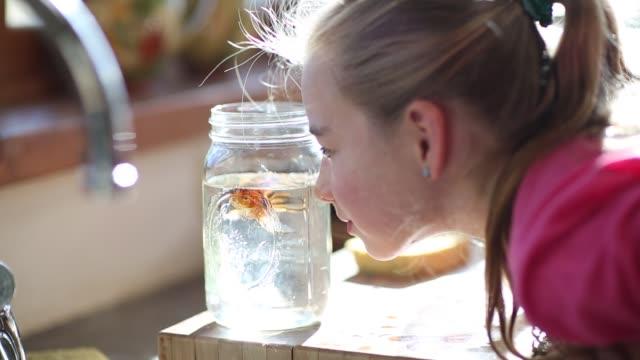 stockvideo's en b-roll-footage met 8 year old girl cleaning out her goldfish bowl - haar naar achteren