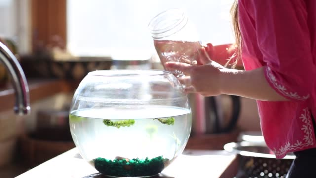 8 year old girl cleaning out her goldfish bowl - bowl stock videos & royalty-free footage