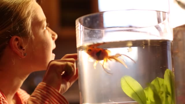 8 year old girl looking at her goldfish - fishbowl stock videos and b-roll footage