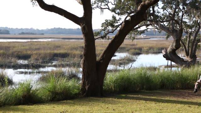 8 year old girl swinging on a swing in the marsh low country - low stock videos and b-roll footage