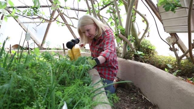 60 year old woman gardener - trädgårdshandske bildbanksvideor och videomaterial från bakom kulisserna