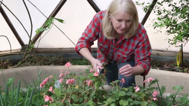 60 year old woman gardener - hobby stock-videos und b-roll-filmmaterial