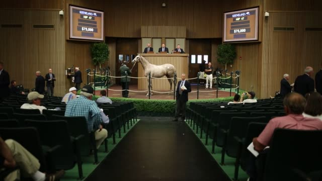 yearling thoroughbred racehorses are sold at auction during the 2016 september yearling sale at keeneland racecourse in lexington kentucky us on... - auction stock videos & royalty-free footage