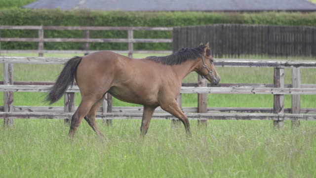 yearling trotting in field - tierfarbe stock-videos und b-roll-filmmaterial