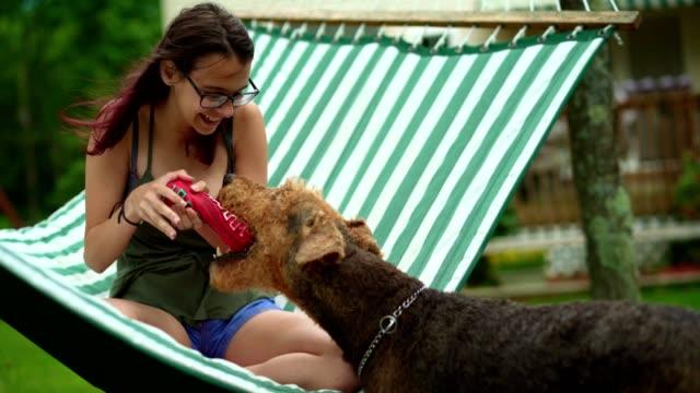 vidéos et rushes de fille d'adolescent âgé de 15 ans se trouvant dans le hamac et jouer avec son chien airedail terrier. - 14 15 years